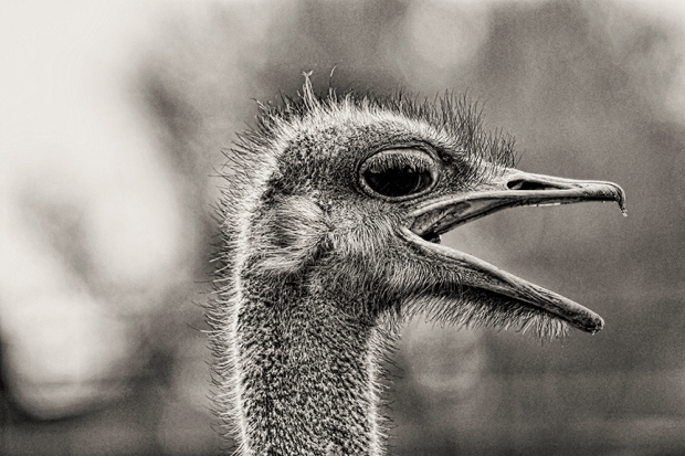 This crazy ostrich has a lot to say about Lauren Berley, Coach for the Gifted and Creative, dba Authentic Way Coaching. The critics have spoken and the reviews are in. Listen to what your colleagues and kindreds are saying.